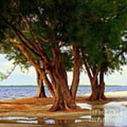 Whispering Trees Of Sanibel Art Print by Karen Wiles