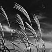 Whispering Wind Art Print by Dan Crosby
