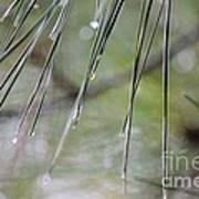 Whispers Of An Autumn Rain Art Print