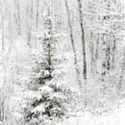 Whispers The Snow Art Print