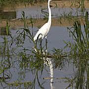 White Bird At June Lake Art Print