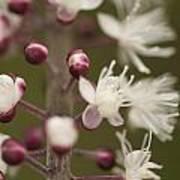 White Blooming Flowers Art Print