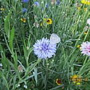 White Butterfly On Purple Flower Art Print