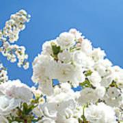 White Floral Blossoms Art Prints Spring Tree Blue Sky Art Print
