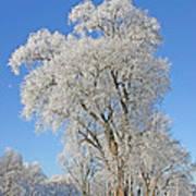 White Frost Tree Art Print