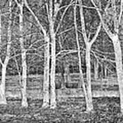 White Grove Art Print