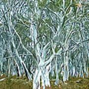 White Gum Forest Art Print