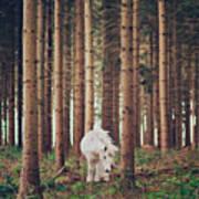 White Horse In The Wood Art Print by Julia Davila-Lampe