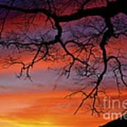 White Oak Sunrise Art Print