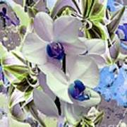 White Orchids And A Touch Of Blue Art Print by Doris Wood