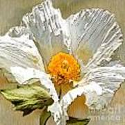 White Paper Flower Art Print by Artist and Photographer Laura Wrede