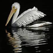 White Pelican De Art Print