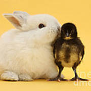 White Rabbit And Bantam Chick On Yellow Art Print