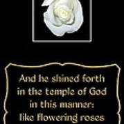 White Rose With Bible Verse From Sirach Art Print