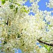 White Shower Tree Art Print