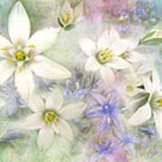White Stars II Art Print