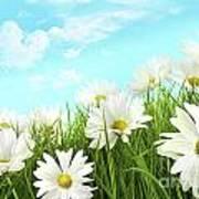 White Summer Daisies In Tall Grass Art Print by Sandra Cunningham