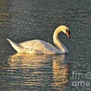 White Swan At Sunset Art Print