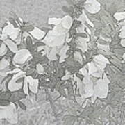 White Wild Flowers Art Print