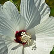 White Wildflower I Art Print