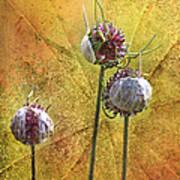 Wild Allium Ala Grunge Art Print