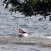 Wild Dolphin Feeding Art Print
