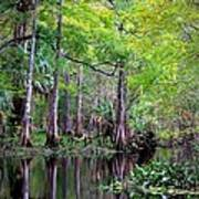 Wild Florida - Hillsborough River Art Print