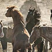 Wild Horse Battle Art Print