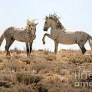 Wild Horse Disagreement  Art Print