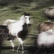 Wild Horses On The Move Art Print