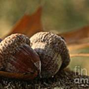 Wild Nuts Art Print