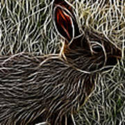 Wild Rabbit Art Print