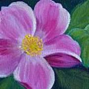 Wild Rose Study 6 Art Print