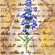 Wild Sage Art Print by Linda Pope