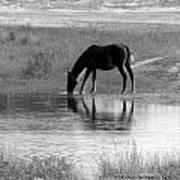 Wild Spanish Mustang Of Obx Nc Art Print