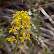 Wildflower On The Trail Art Print