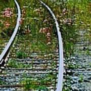Wildflower Railroad Art Print