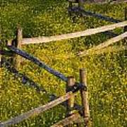 Wildflowers And A Wooden Fence At Art Print