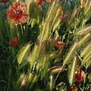 Wildflowers And Grass Tufts In Provence Art Print