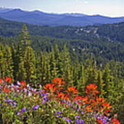 Wildflowers And Mountaintop View Art Print by Ellen Thane and Photo Researchers