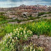 Wildflowers In Badlands Art Print