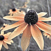 Wildflowers Of Ontario Art Print
