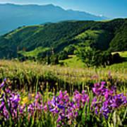 Wildflowers Umbria Art Print