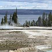Wildlife In Yellowstone Art Print