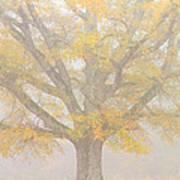 Willow Oak In Fog Art Print by Bill Swindaman