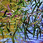 Willows At The Pond Art Print