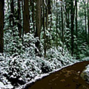 Winding Forest Trail In Winter Snow Art Print