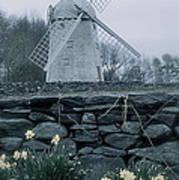 Windmill And Daffodils  Art Print