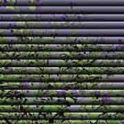 Window Blinds Prints Art Print