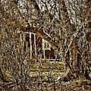 Window Of Roots Art Print